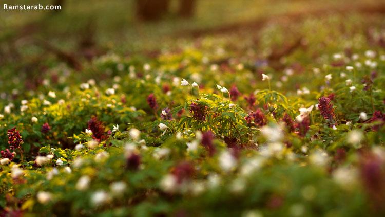 اعشاب طبيعية جميلة من اجمل الخلفيات الطبيعية