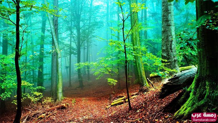 خلفيات اشجار بجودة عالية