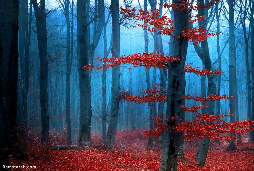 صورة غابة طبيعية