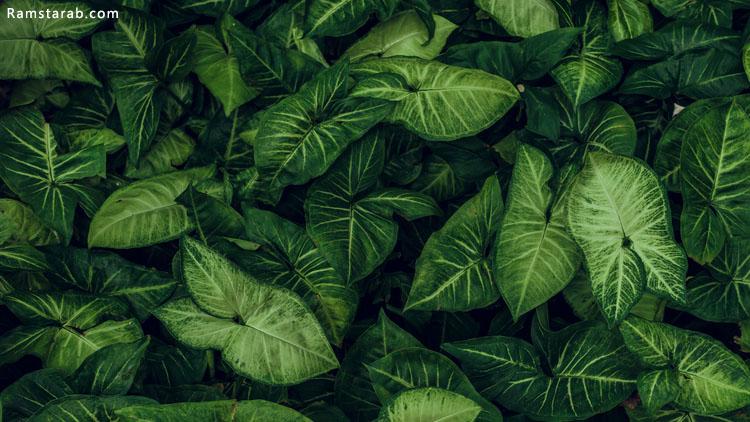 صورة ورق شجر طبيعي جميل