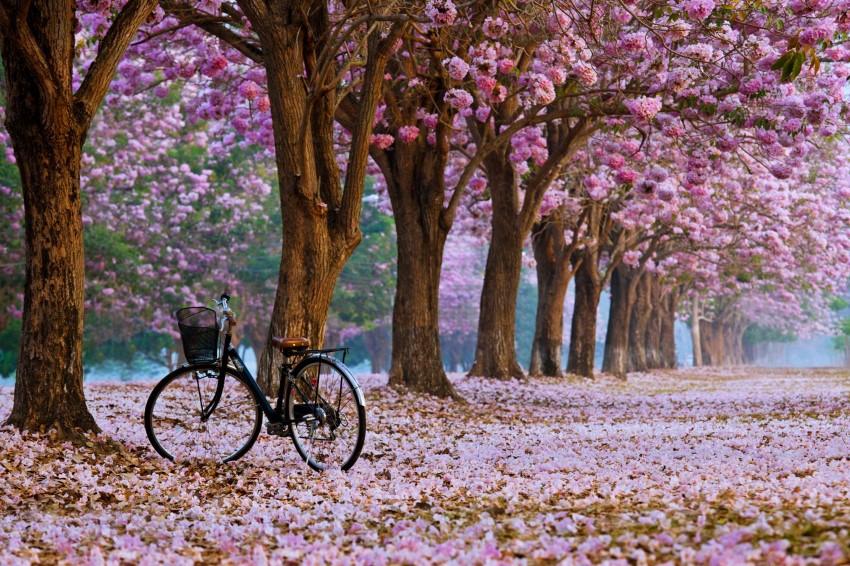 صور طبيعية جميلة