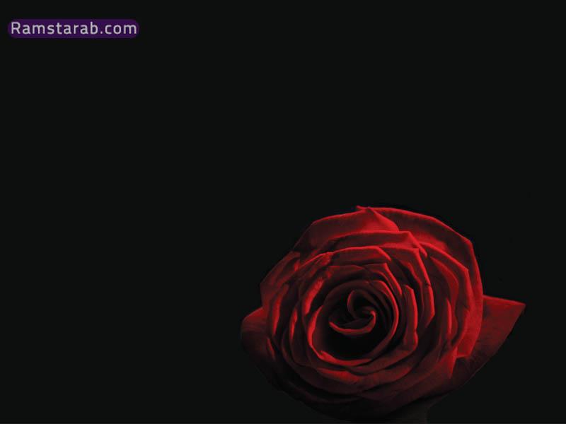 صور ورد احمر