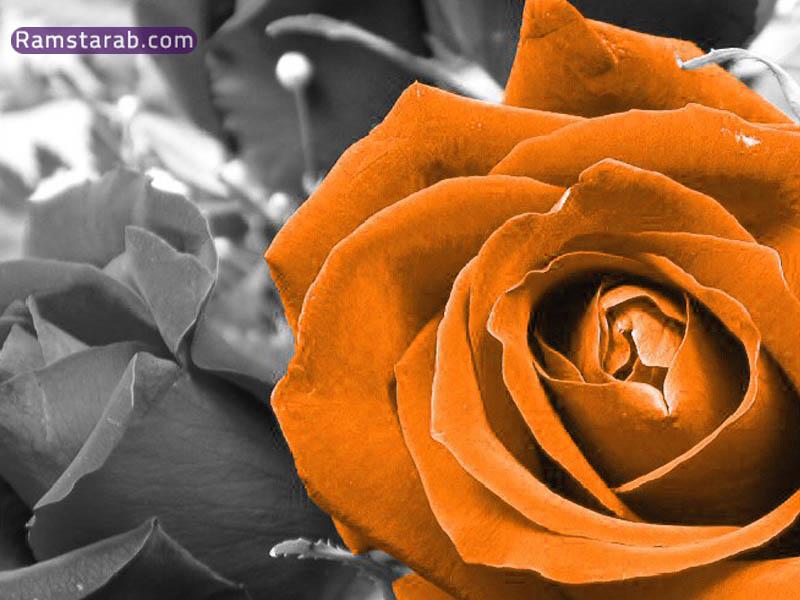 9d77dccaf صور ورد عالية الجودة اجمل صور بوكيهات ورد تحميل صور ورد رائعة ...