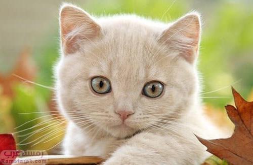 قطة جميلة