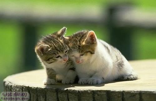 قطط صغيرة 2