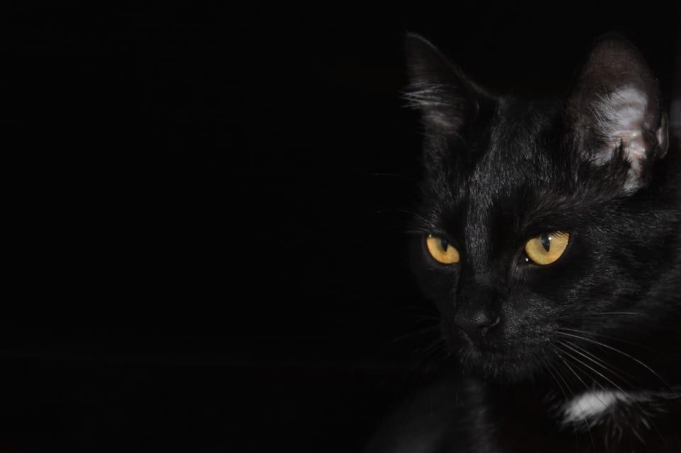 خلفيات سوداء قطط