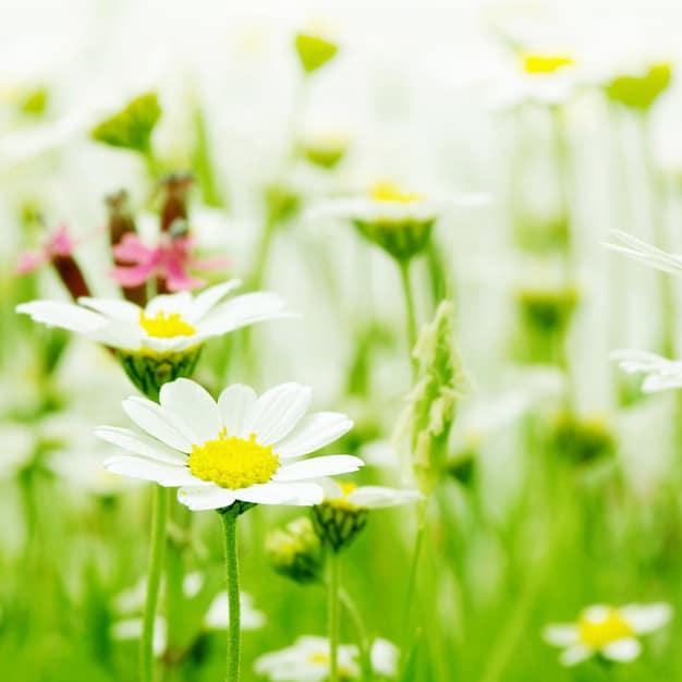 خلفيات زهور hd