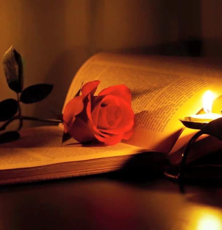 صورة وردة داخل كتاب للبروفايل