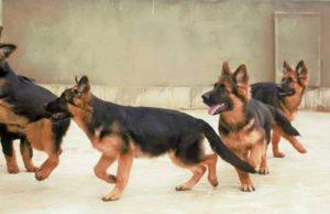 صور رمزية كلاب20