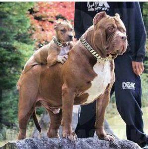 صور رمزية كلاب6