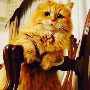 صور قطط شقية10