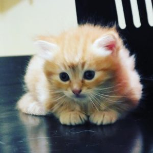 صور قطط شقية11
