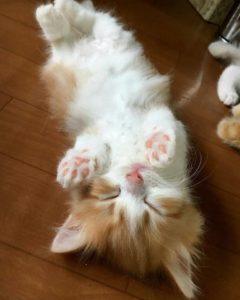 صور قطط شقية13