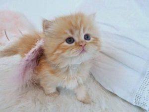 صور قطط شقية14