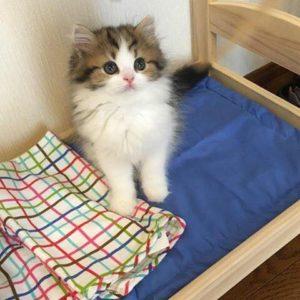 صور قطط شقية15