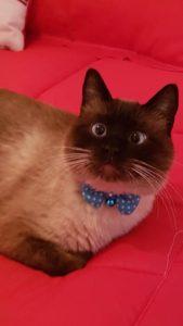 صور قطط شقية16