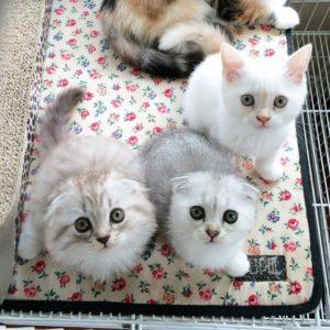 صور قطط شقية17