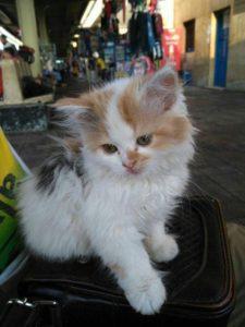 صور قطط شقية18