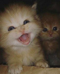 صور قطط شقية19