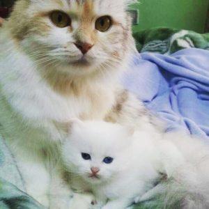 صور قطط شقية6