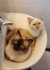صور قطط كيوت3