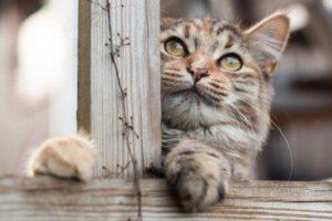 صور قطط كيوت5