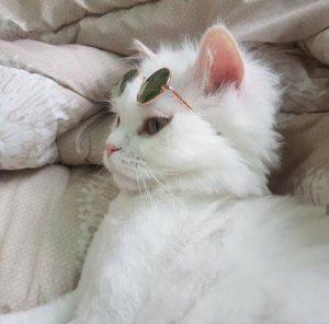 صور قطط كيوت6