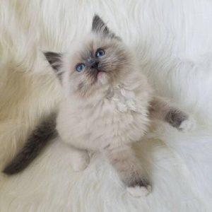 صور قطط كيوت7