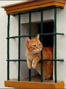 صور قطط10