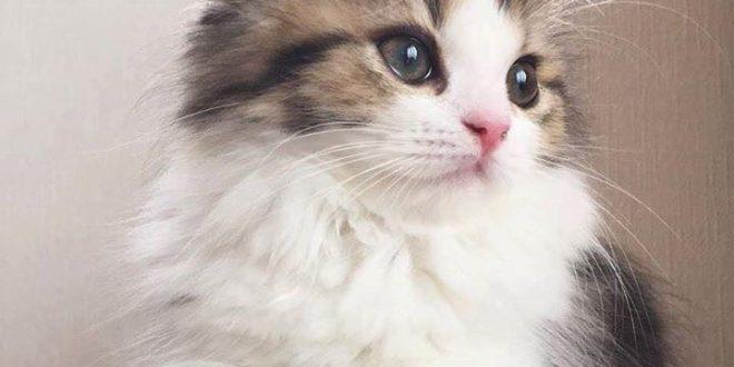 صور قطط13