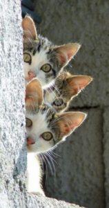 صور قطط14