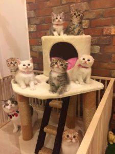 صور قطط2