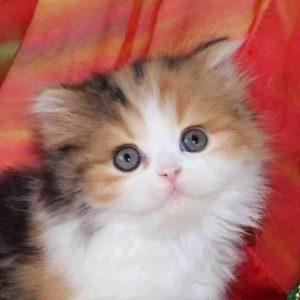 صور قطط4