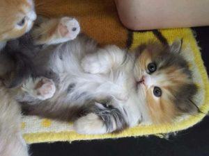 صور قطط7