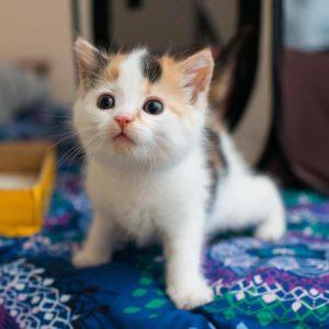 صور قطط8
