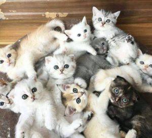 صور قطط18