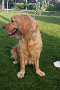 صور كلاب للفيس بوك2