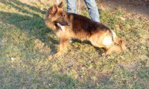 صور كلاب للفيس بوك3