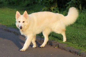 صور كلاب للفيس بوك4