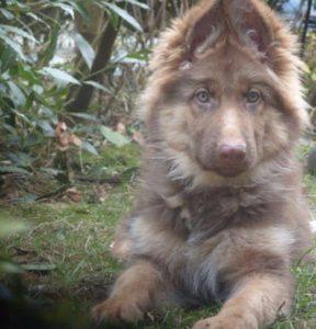 صور كلاب للفيس بوك7