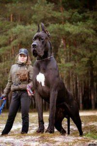 صور كلاب للفيس بوك8