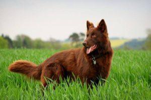 صور كلاب للفيس بوك9