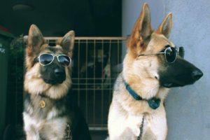 صور كلاب 15