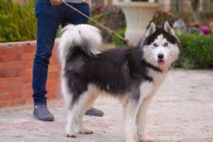 صور كلاب 18