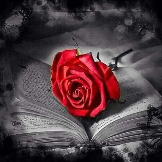 وردة على كتاب
