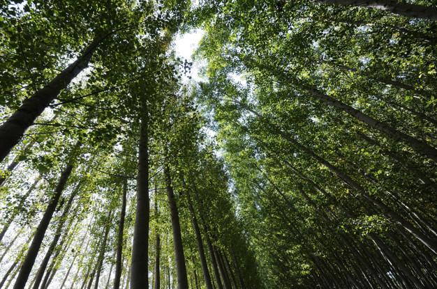صورة غابات جميلة