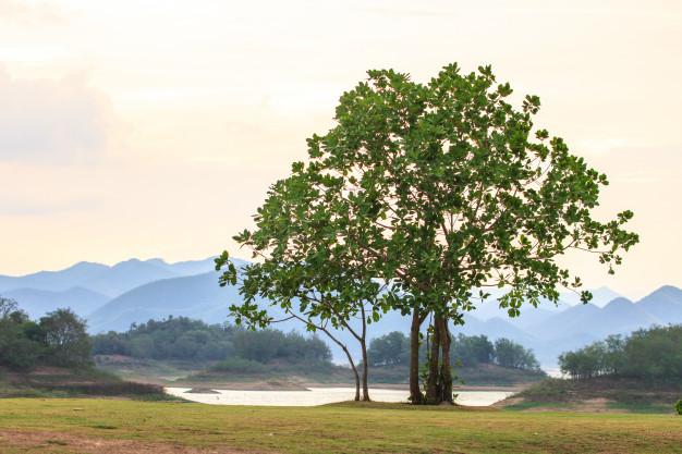 صوة شجرة جميلة جدا