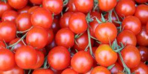صور رمزية طماطم13