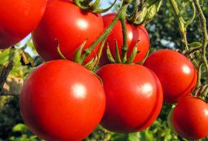 صور رمزية طماطم21