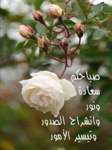 صور صباح الخير23